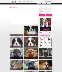 赛级进口狗狗网站模版