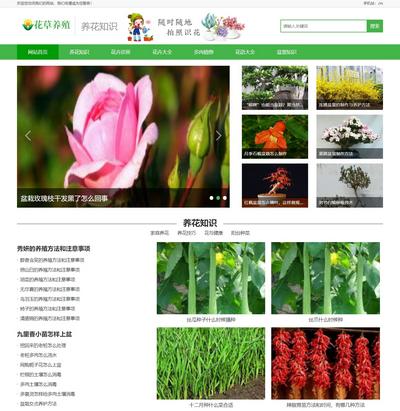 花卉花草種植新聞資訊門戶類網站