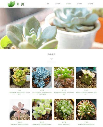 绿色多肉植物养殖厂家公司html网站模板